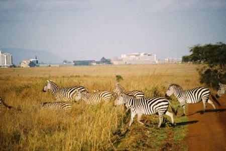 Найроби: 7 основных достопримечательностей Найроби