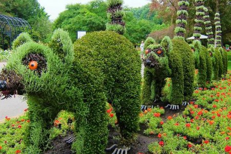 Ботанический сад Бухареста