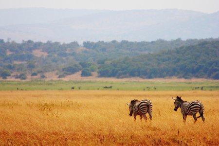 Руанда: 7 основных достопримечательностей Руанды