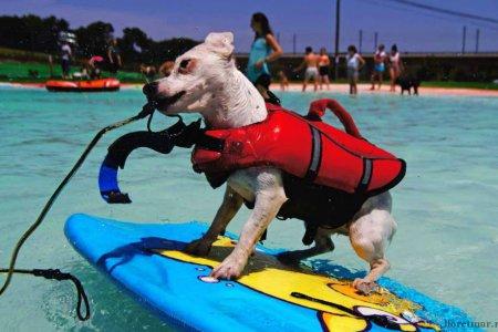 В Барселоне появится специальный пляж для собак